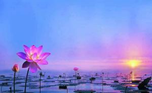 lotus-pink sunrise water-mud