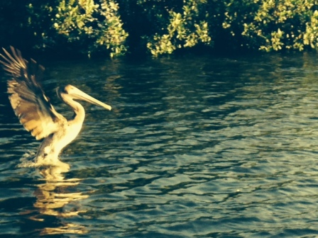 """""""and still we rise"""" taken at bird island, st Petersburg, florida by wise owl betsy"""