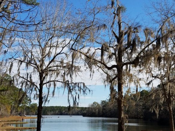 """SPANISH MOSS in L.A. - LOWER ALABAmA"" TAKEN YESTERDAY BY WISE OWL LUCKY"
