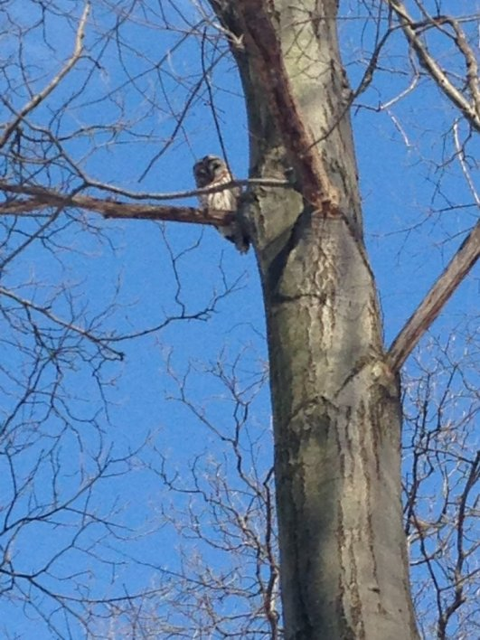 PHOTOGRAPH TAKEN ON MARCH 6, 2015 BY WISE OWL IRMA WHILE ON A WALK WITH HER DOG