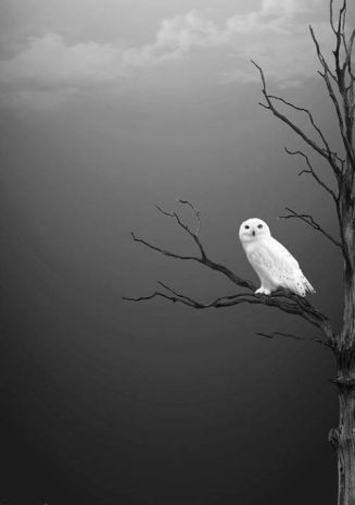 owl-white-owl-on-stark-black-tree-gray-skies