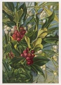Holly and Mistletoe