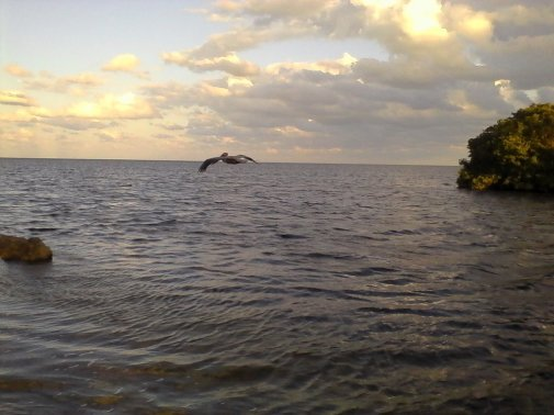 PHoto taken at deering point, palmetto bay, florida by wise owl kahlil