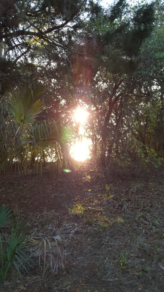 """SUN reflecting off water through trees"" taken in wall springs, florida by wise owl brenda"
