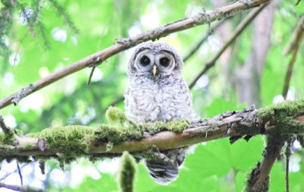 photograph taken ON Vancouver island by wise owl tara